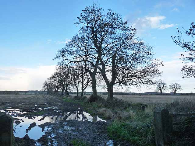 Wintry trees at Jingling Gate