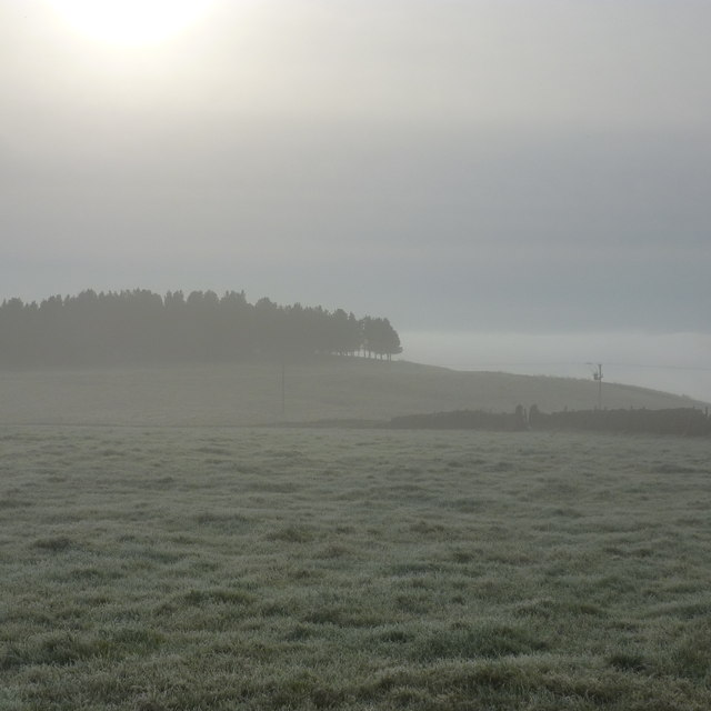 Frosty and misty, near Ball Cross Farm