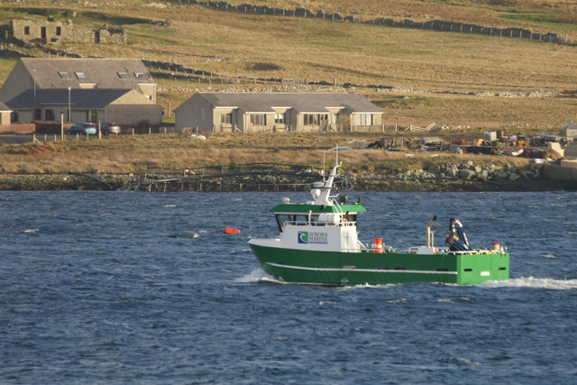 Salmon boat in Uyea Sound