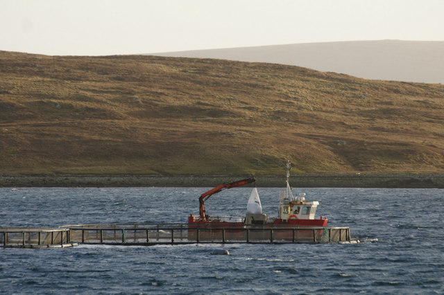 Delivering feed to salmon cages, Uyea Sound
