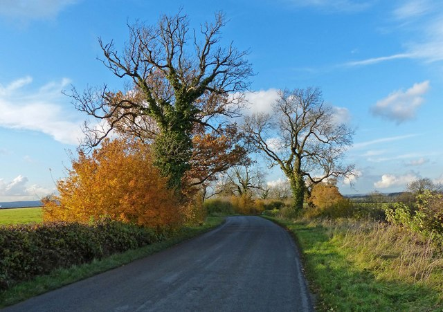 Autumn colours along Keyham Lane