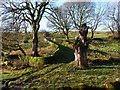 SK1276 : Walled path at Dalehead by Graham Hogg