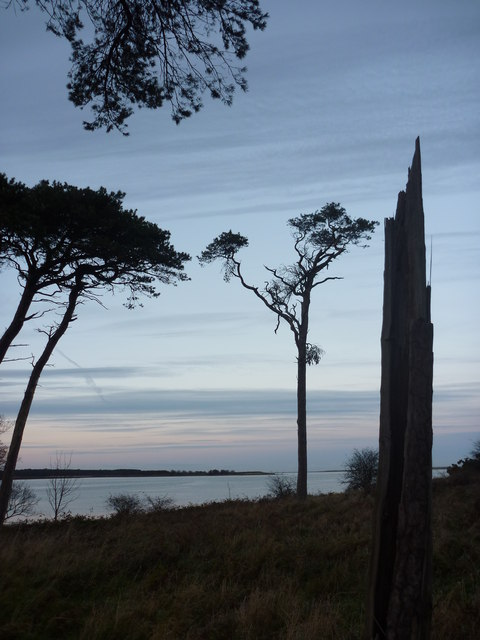 Coastal East Lothian : A Sharp Stump At Hedderwick
