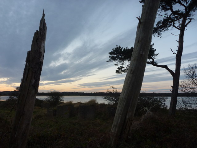 Coastal East Lothian : Blocks and Pines at Hedderwick