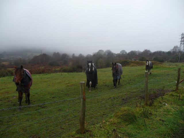 Pony paddocks near Castle Wood, Talywain