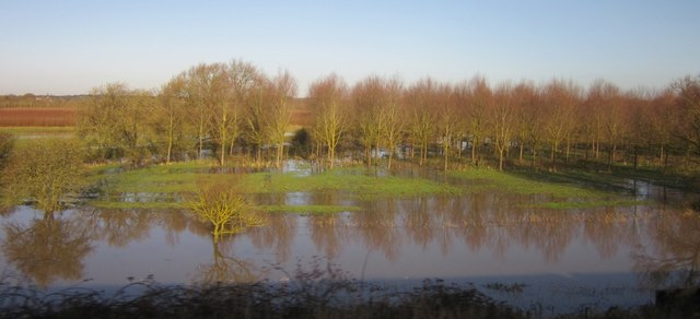 Flooded woodland by the Cole