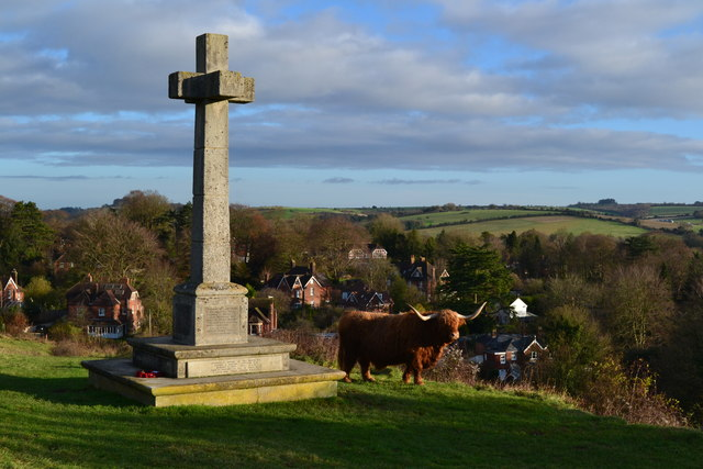 Highland cattle at war memorial on Shawford Down