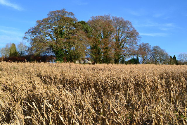 Crops and trees, Twyford