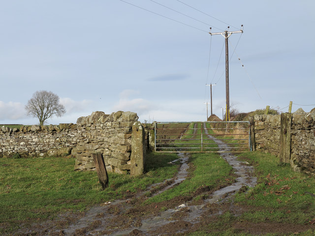 Farm track above path near River Tees