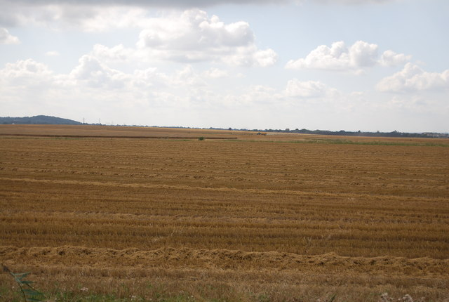 Expansive harvested wheat