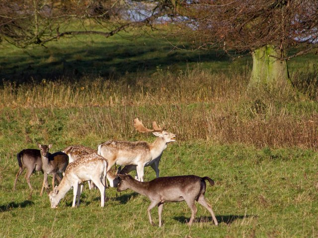 Deer in Charlecote Park