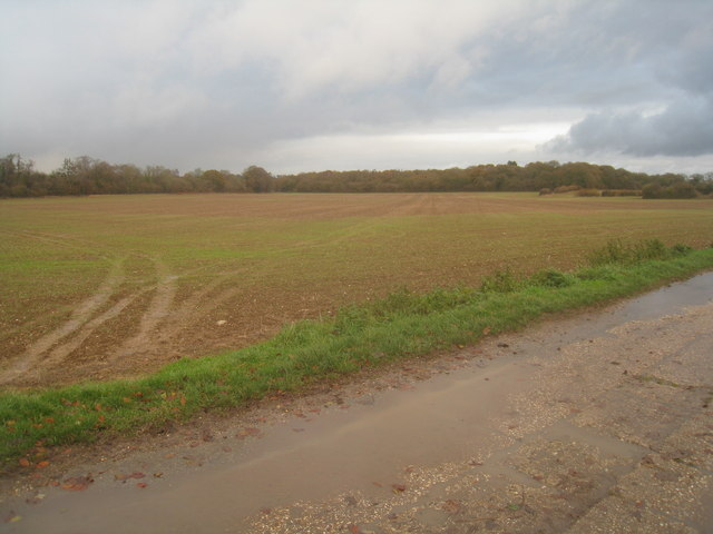 Grey sky & Wells Copse