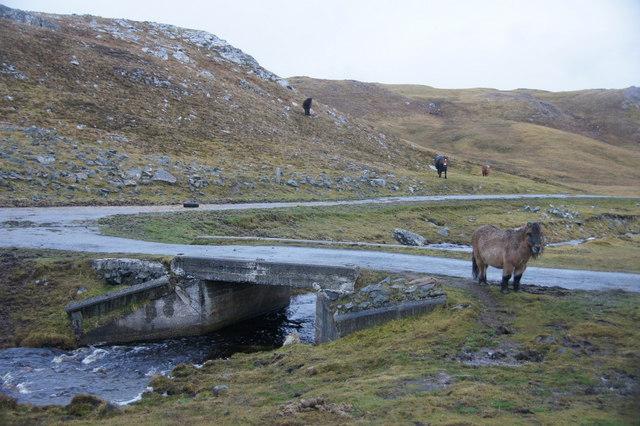 Horses near Mangaster