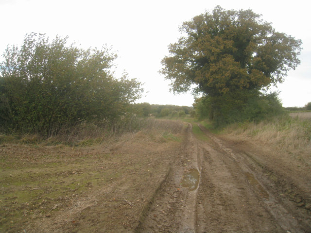 Farm track near Jeffery's Copse
