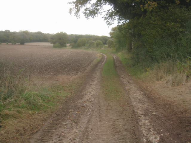Farm track / Jeffery's Copse