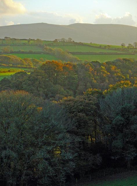Trees in Cwm-yr-Allt-Lwyd, Meline: sunset
