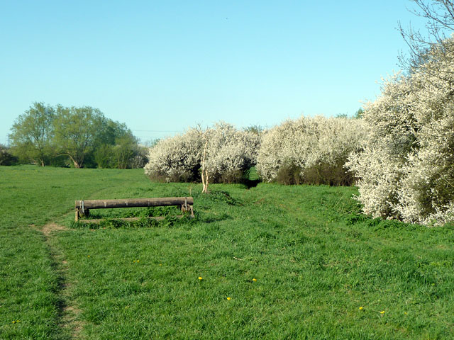 Blossom by the London Loop