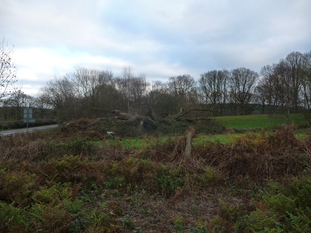The decaying Mawley Oak near Cleobury Mortimer