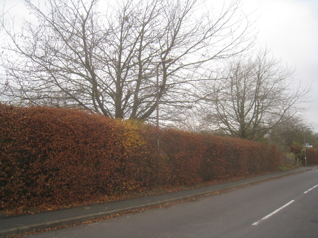 Autumn on Kennet Way