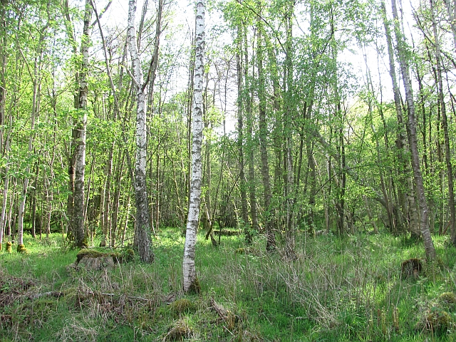 Woodland near Grandtully