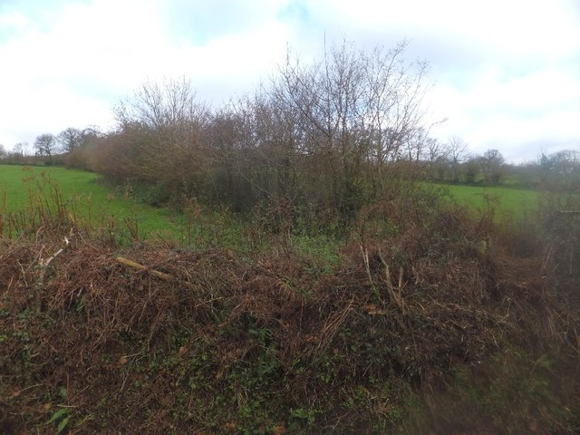 Hedges on Combe Hill