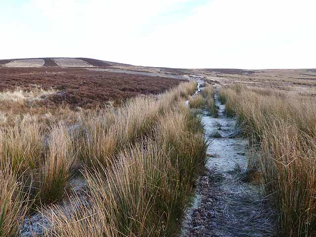 Bridleway from Allendale Town to Harwood Shield