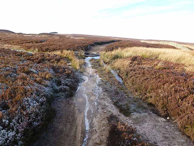 Bridleway from Harwood Shield to Allendale Town