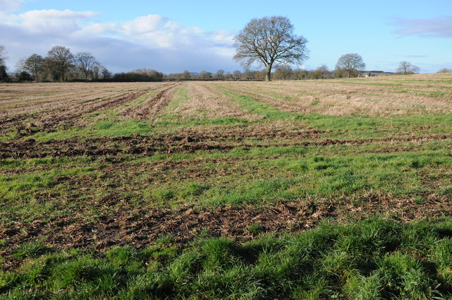 Stubble field at Preston Wynne