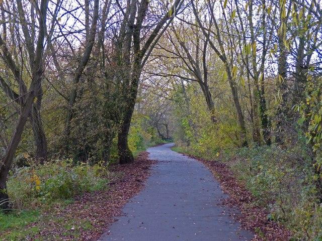 Path through the trees