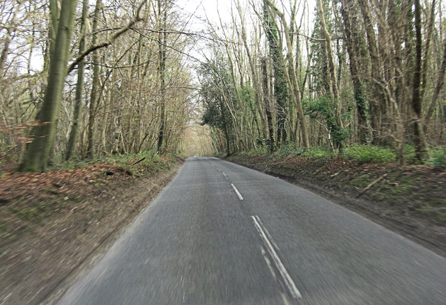 Belmore Lane within High Wood
