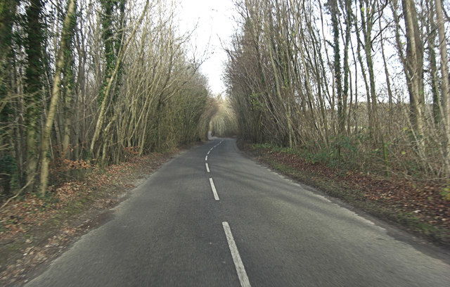 Salt Lane within Saltlane Plantation