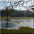 SK2168 : Frozen flooded field by Peter Barr