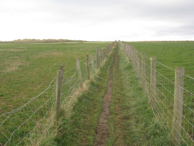 Path to the cliff top