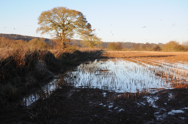 Flood water on a harvested field
