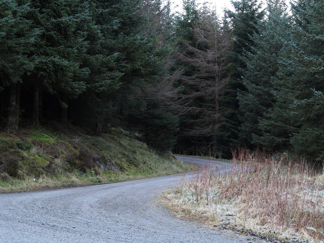 Bends of forestry road in Comb Plantation