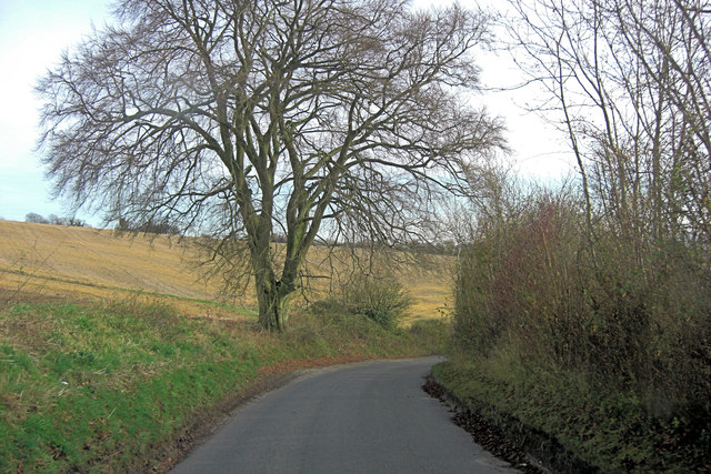 Wheely Down Road and a superb beech tree