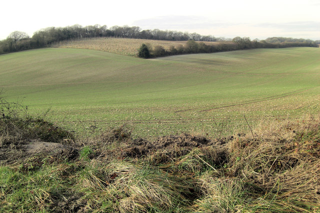 Arable land and new trees north of Warnford
