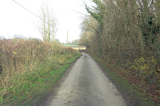 Lippen Lane beside Little Lippen Wood