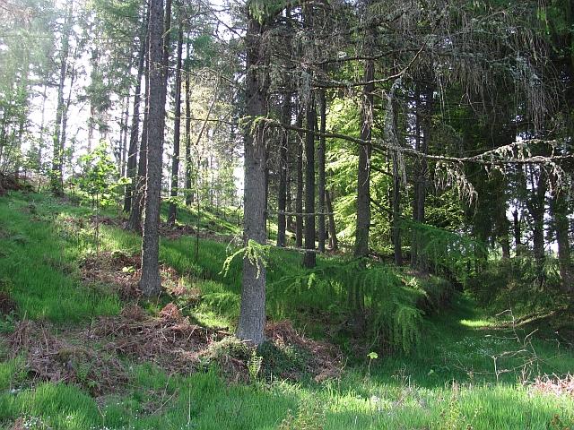 Forest opposite Ballinluig