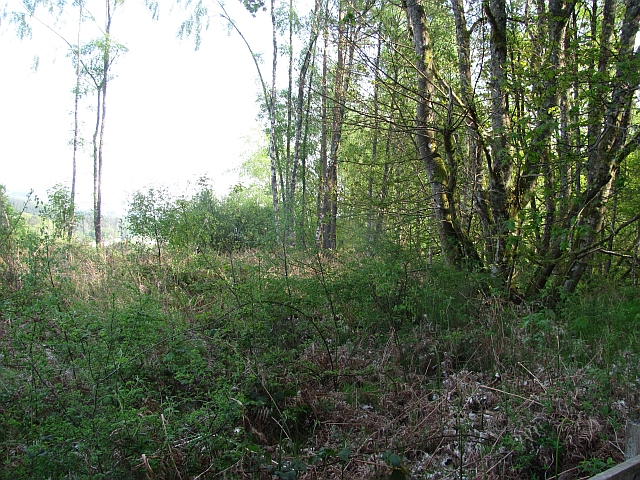 Woodland opposite Ballinluig