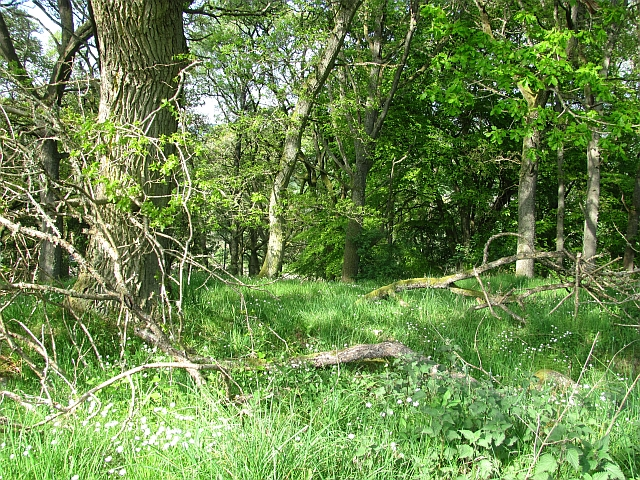 Oak wood, Dunfallandy