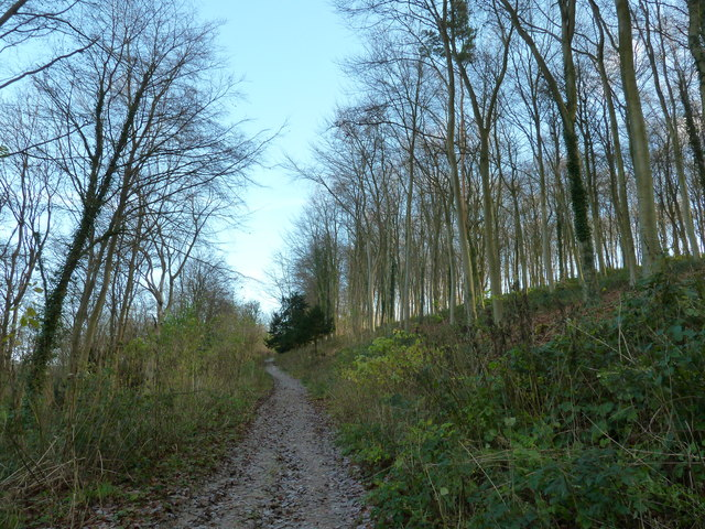 Bridleway 471 through Walderton Down