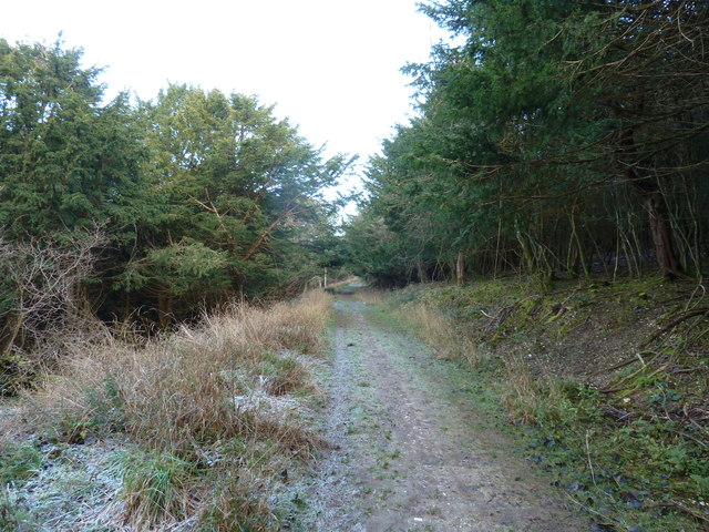 Woodland track on Walderton Down