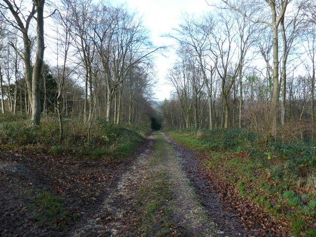 Bridleway 469 descending to Stoughton