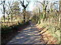 ST2992 : Central section of Ty Coch Lane, Llantarnam by John Grayson