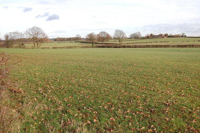 Fields off Bethersden Road