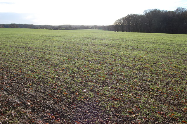 Winter Crop field near Kiln Wood