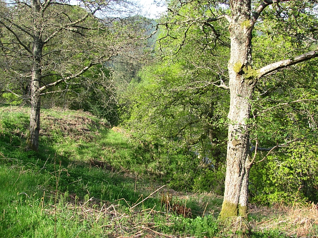 Oak woods by Loch Fascally