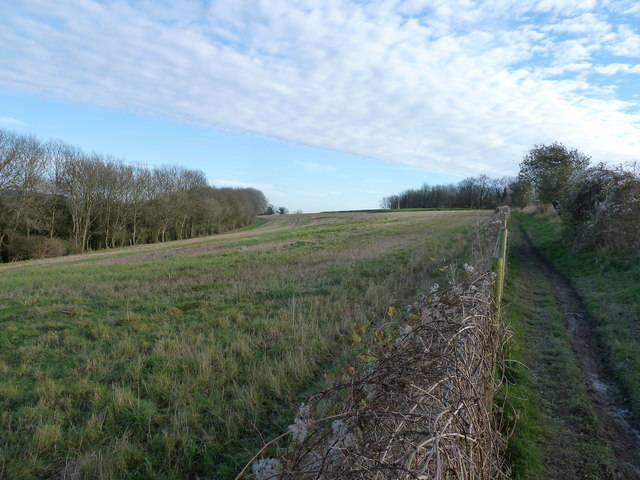 Bridleway approaching Stoke Clump