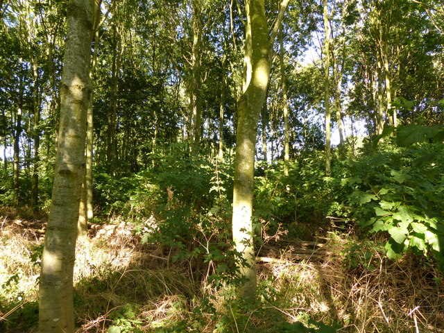 Woodland on the Riverside Park in Aylestone